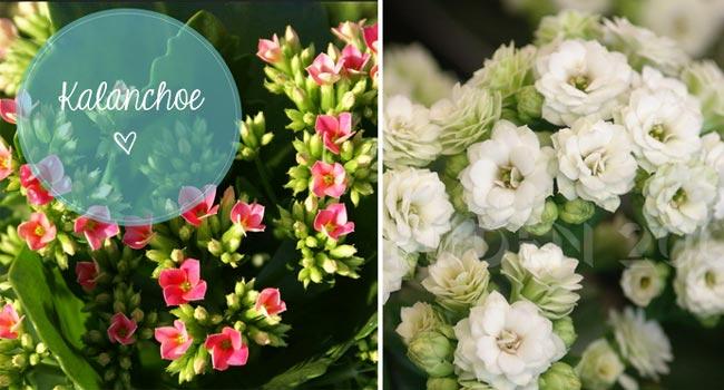 Faça você mesmo: Arranjinhos de flores feitos com jornal