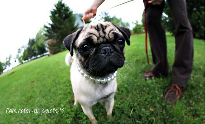 Cachorros_casamento5
