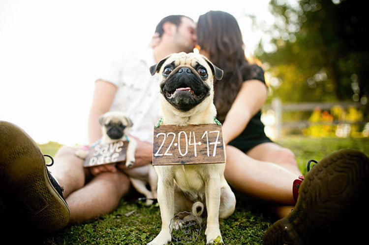 Save the date pet: Pam e Gui