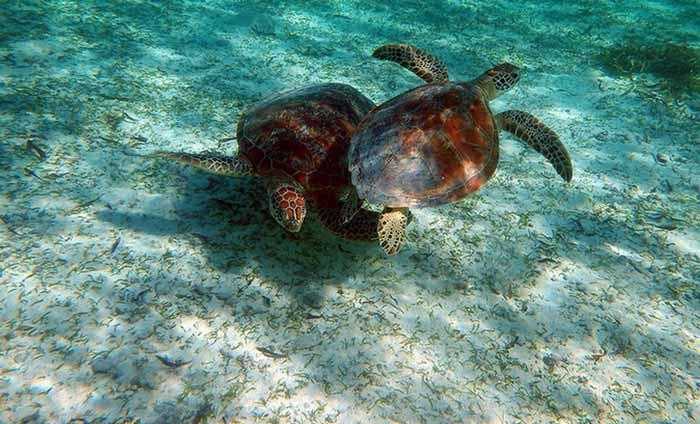 Lua_de_mel_Seychelles3