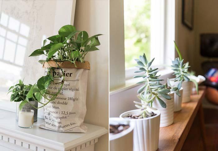 decoracao_da_casa_com_plantas