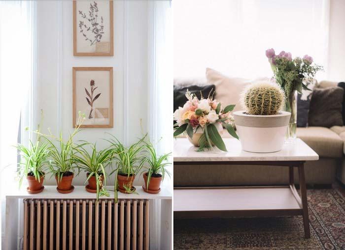 decoracao_da_casa_com_plantas1