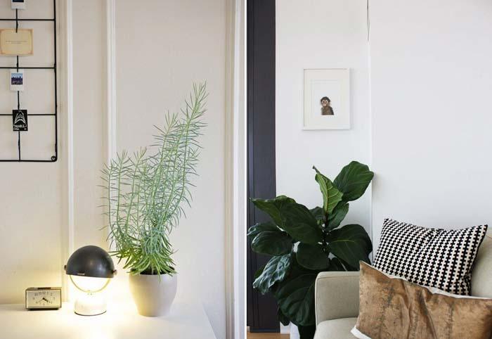 decoracao_da_casa_com_plantas6