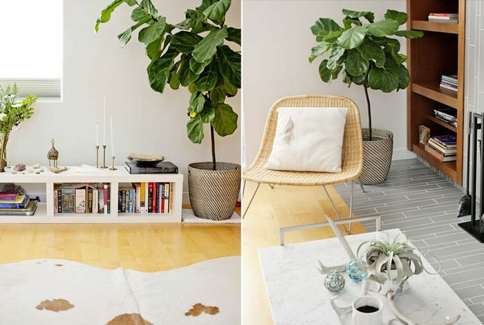 decoracao_da_casa_com_plantas9