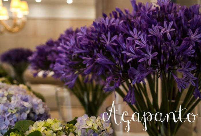 flores_da_primavera4